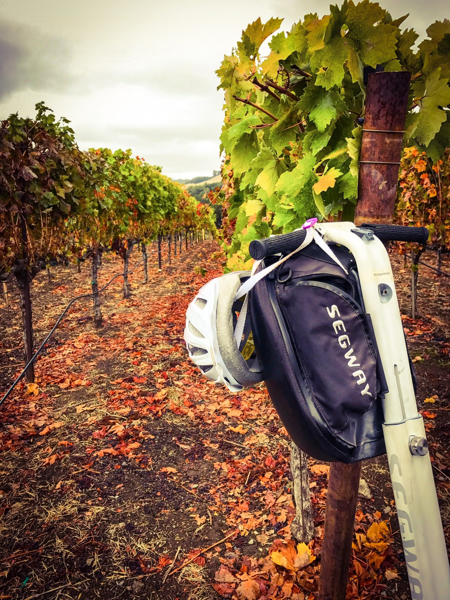 Sonoma-County-Wineries-Segway-Tour